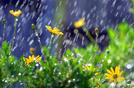 雨と花.jpg