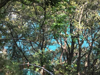木々の間の海