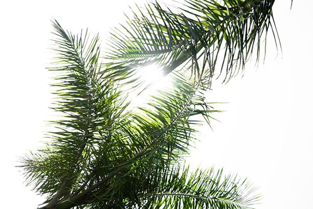 植物越しの太陽