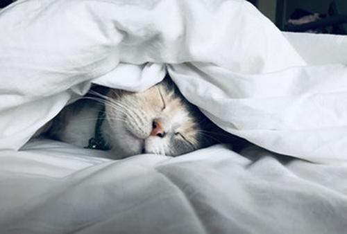 ベッドに潜る猫